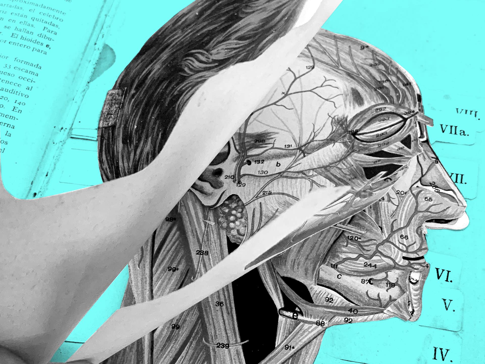 Atlas Anatómico